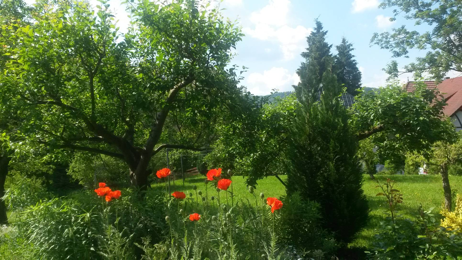 04_pension_rau_garten